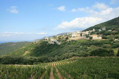 Weinberge auf Korsika